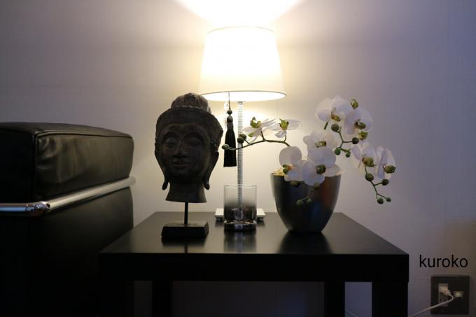 花市場で買った胡蝶蘭のインテリア例