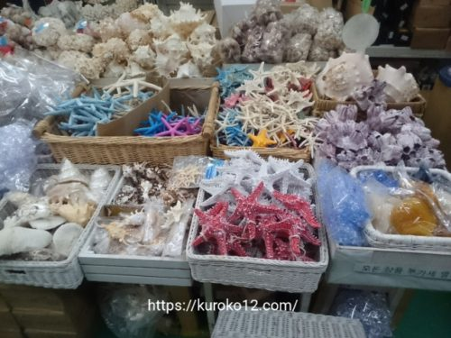 花市場で売られてる貝やヒトデの画像